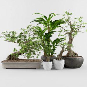 600 PLANT NEW MODELS 2021 (10)