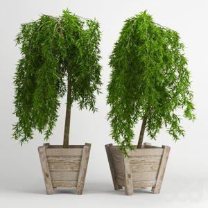 600 PLANT NEW MODELS 2021 (2)