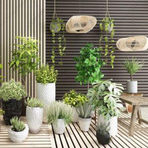 600 PLANT NEW MODELS 2021 (8)
