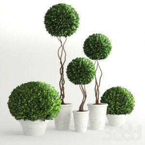 600 PLANT NEW MODELS 2021 (9)