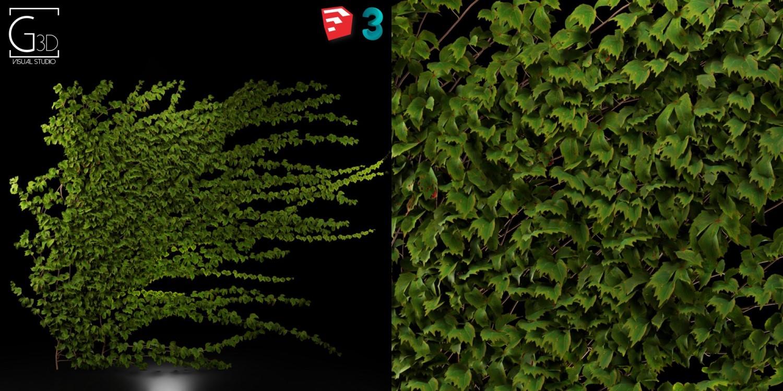 RANDOM MODELS – PRO MODELS 237 – PLANTS