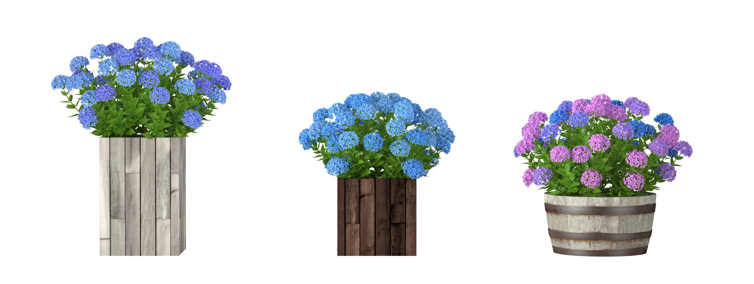 RANDOM MODELS – PRO MODELS 319 – FLOWER MODELS