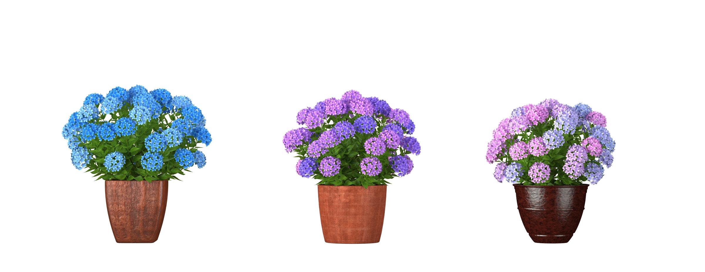 RANDOM MODELS – PRO MODELS 320 – FLOWER MODELS