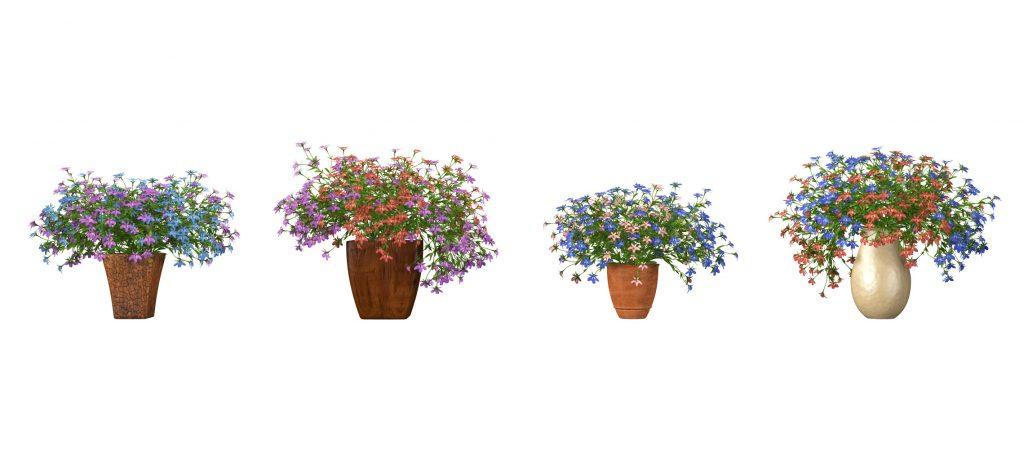 RANDOM MODELS – PRO MODELS 323 – FLOWER MODELS
