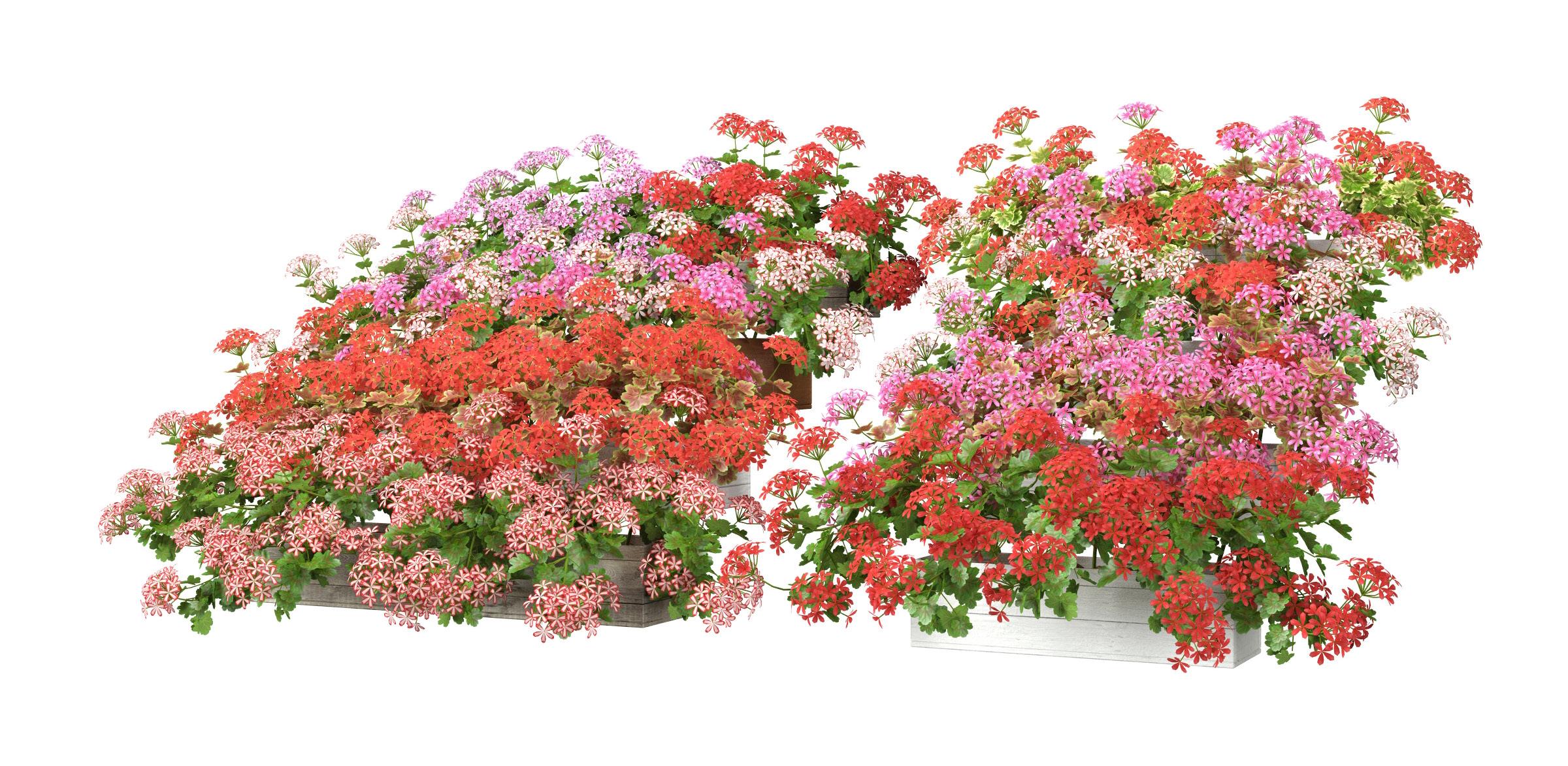 RANDOM MODELS – PRO MODELS 325 – FLOWER MODELS