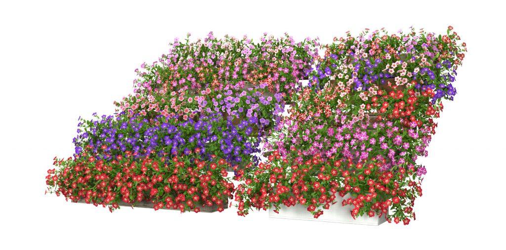 RANDOM MODELS – PRO MODELS 329 – FLOWER MODELS