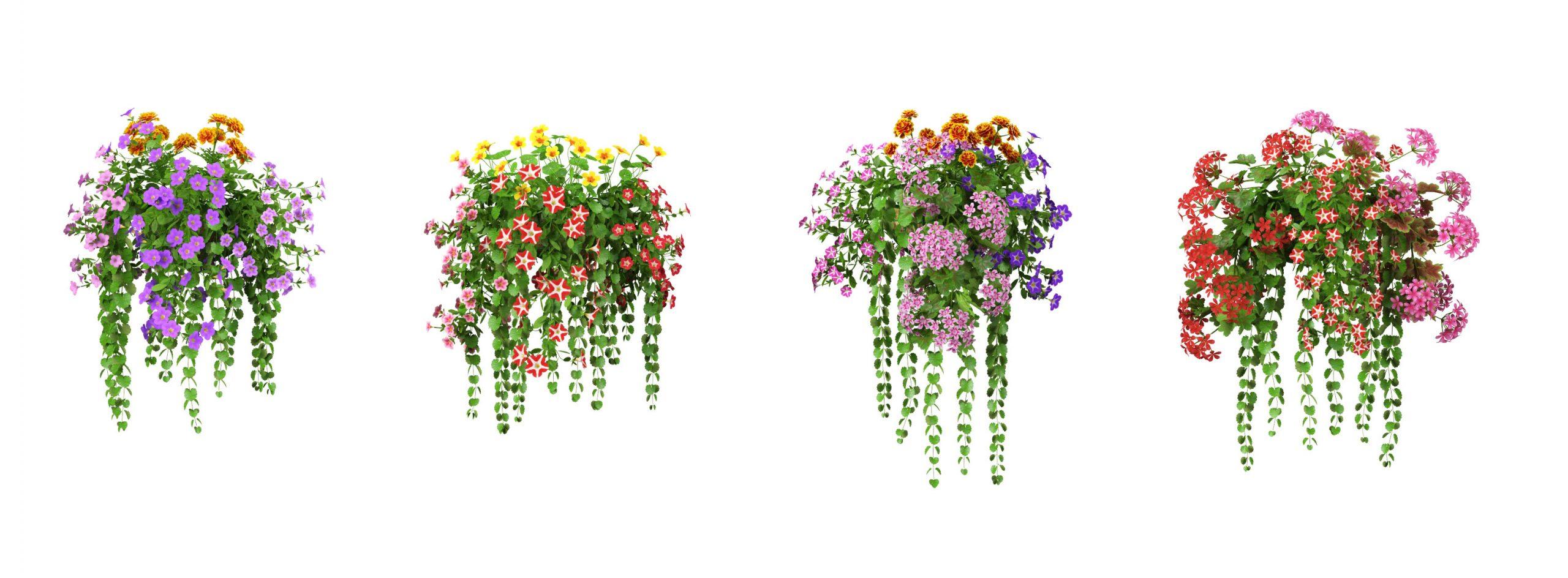 RANDOM MODELS – PRO MODELS 332 – FLOWER MODELS