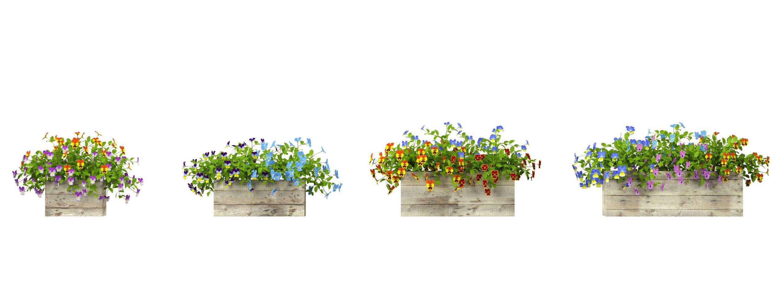 RANDOM MODELS – PRO MODELS 337 – FLOWER MODELS