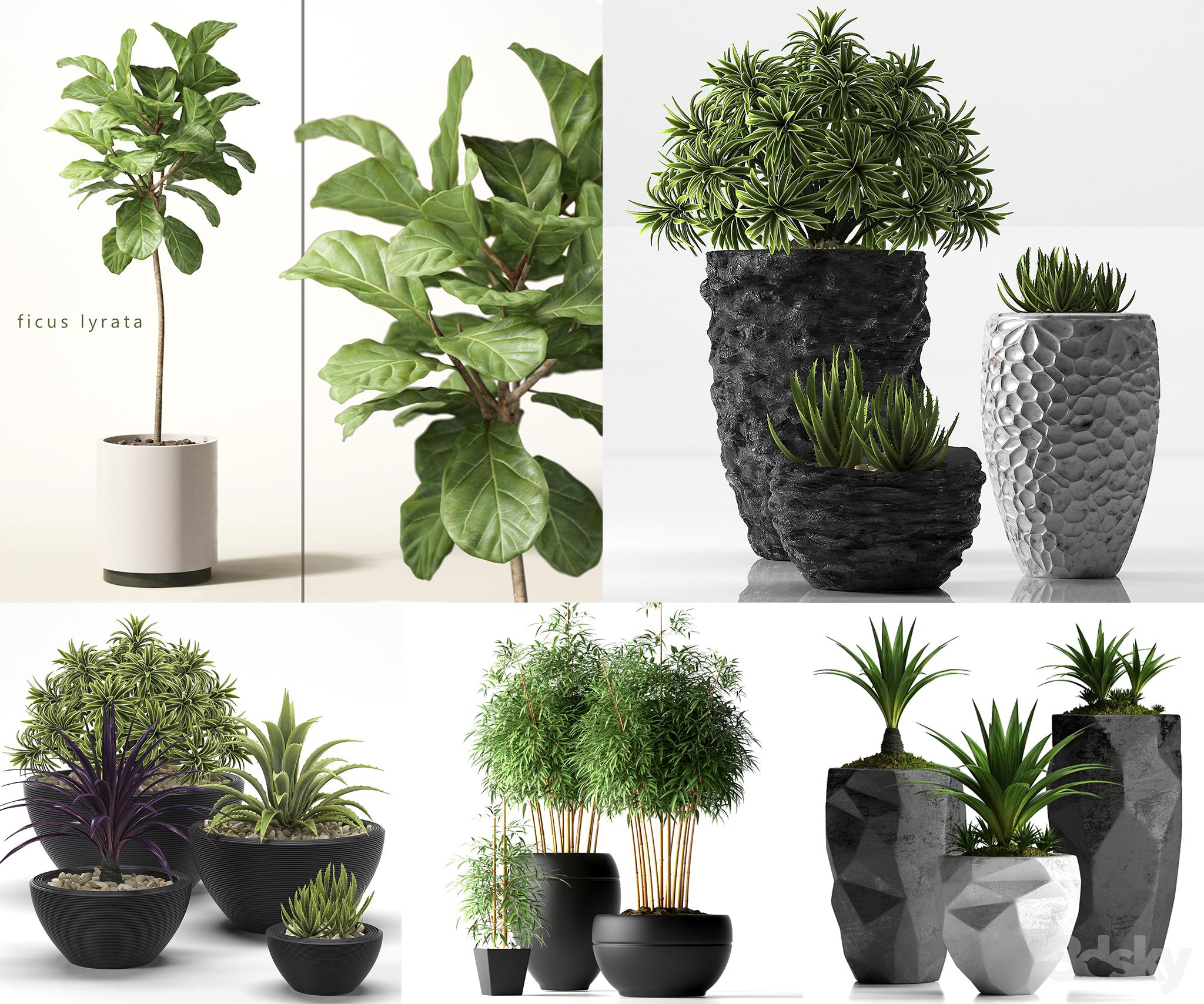 RANDOM MODELS – PRO MODELS 411 – PLANTS 3D MODEL